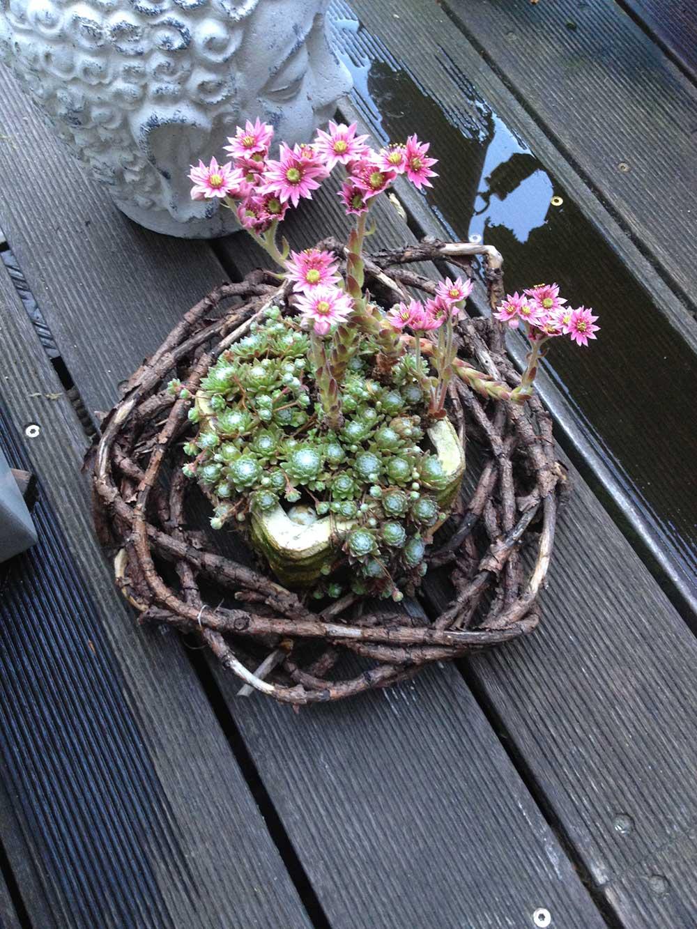 Deko Lifestyle Babsys Blumen Und Floristik